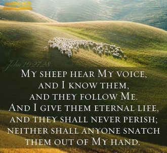 my sheep hear my voice